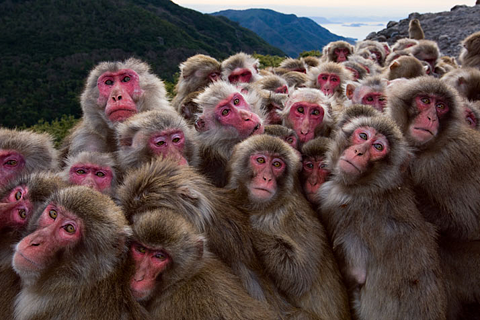lots_of_monkeys