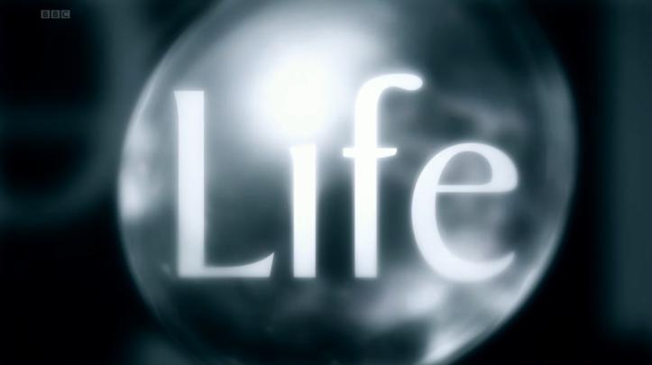 800px-BBC_Life_title_card